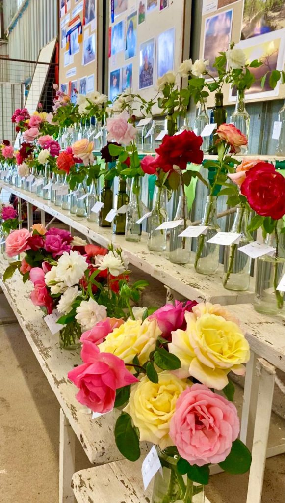 Roses on show at the Bourke Show 2021