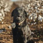 Winston, the farm dog